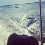 Dolphins following our boat!