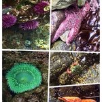 Sea creatures we saw