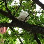 albino sqirrel