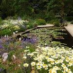 Iily pond Hidcote