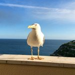 our bird friend who visited our balcony daily.