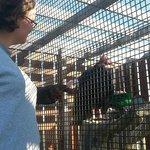 Myself feeding Herman Munster the Turkey Vulture