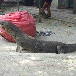 варан атакует :)