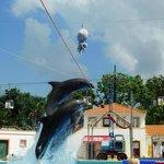 Espetáculo dos Golfinhos