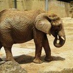 Zona dos Elefantes