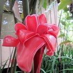 perfekte Flora