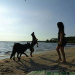 My dogs and I on the beach