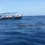 The whale shark from the boat