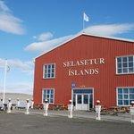 Icelandic Seal Center