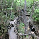 Extensive boardwalk through the gorge
