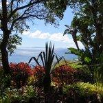 Ausblick aus dem Garten des Reid's