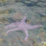 starfish at narrows