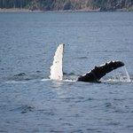 Humpback whale sighting.