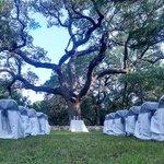 The wedding setup by the large based tree