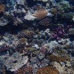 Coral fish.