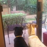 Doggies looking out in to the back patio