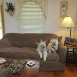 Living room of cottage.  Slipcovered for the pooches.