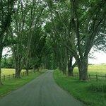 Ash Lawn-Highland Driveway