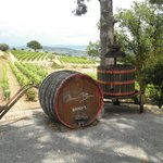 Bandol Appellation - Provence Wine Tours
