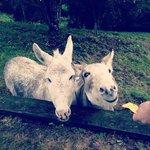 Shania and Ricky!