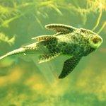garish fish
