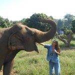 Feeding the elephants bananas