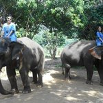 Learning to give the elephants commands