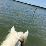 Journée découverte de la Camargue à cheval