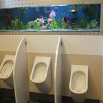 Fishes everywhere....even in the loo
