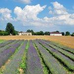 L'Agriturismo sorge in aperta campagna