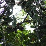 Luiaard die vlakbij onze lodge in de boom hing