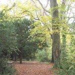 Pwllycrochan Woods Local Nature Reserve