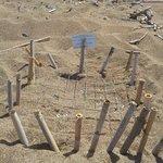 Nido di tartarughe segnalato sulla spiaggia