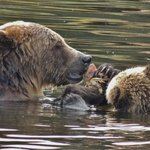 Mother with cub
