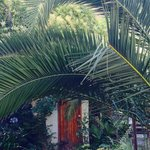 Palm Gallery Hotel garden