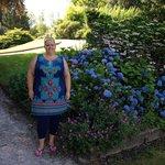 Beautiful gardens - blue hydrangea