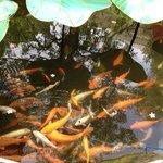 Gold fish pond!