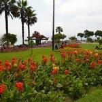 Jardines al rededor del parque