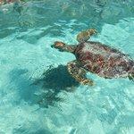 Tortugas en Lagoonarium