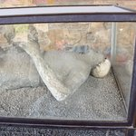 One of the bodies found at Pompei