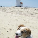 Brant Point Lighthouse - easy walk from the Inn