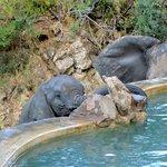 Elefantes en la Pileta