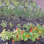 Winsor House Herb Garden