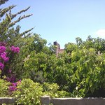Vegetazione Elbana