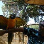 Papagayos preciosos