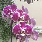 Le Orchidee di Kristina