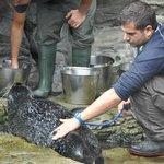 у тюленя меряют температуру