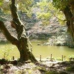 Pond in Naritasan Koen