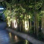 Живой бамбук