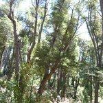 Bosque camino a la cascada